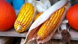 Corn, pumpkins, products, autumn, food, colorful