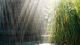 Raining with sunlight