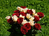 Rose Flowers Wallpapers 3