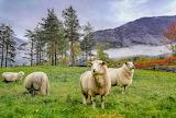 Mountain Meadow Norway - Photo from Piqsels id-jjlxe