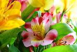 тропический цветок 9