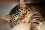 Cats Glance Snout 562462 1280x853