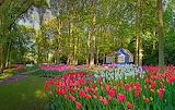 Keukenhof-Garden-Tulips-Spring