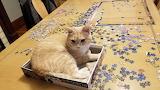 20201227_095953_cat_Frankie_puzzle