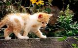 Gat - Cat