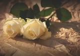 Rose su carta stropicciata