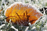 Yellow leaf, ice crystals, frost, grass, winter