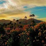 Palm Desert at dusk