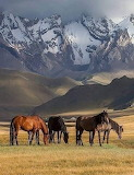 Horses - Gorgeous