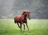 Morning gallop