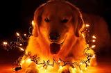 #Puppy Christmas Lights
