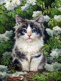 Kitten Yana Movchan