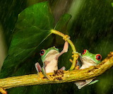 Nice picture of frogs
