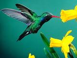 Bird loves flower