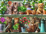 Katzen-im-regal