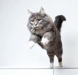 Go On And Jump