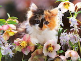Kitten and Flowers...