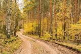 Jesień- foto-Renata Sompolska
