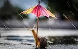 Rain. Snail under an umbrella