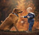 Dog with friend