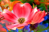 ☺♥ Pretty flower...