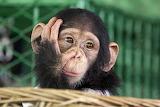 Mico - Monkey