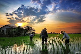 Rice Paddy Workers -- Foo Weng, Photographer