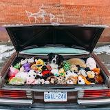 Dog Momo Car