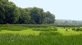 Lush Wetlands