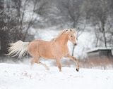 ^ Horse playing in the snow