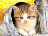 A kitty in the bucket...