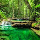 Amazon rainforest jungle and emerald river