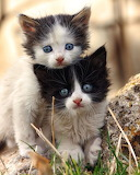 Mignons ces chatons