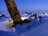1280-eagle