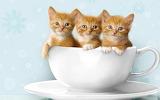 Cute-baby-kittens