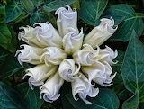 Необычные цветы