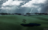 Stormy_Lone_Tree_by_gunnertracker