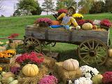 Harvest haul