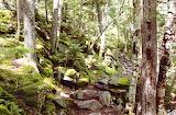 Uphill To White Rocks Cliffs