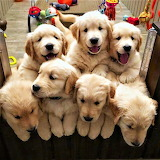 A bunch of happy puppies