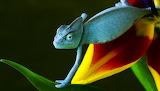 Blue Chameleon...