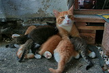 Cat with 6 kittens