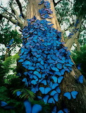 butterflies on tree trunk