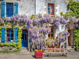 House facade covered with wisteria