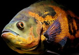 #Fish in High Definition