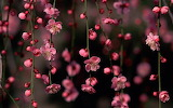 Abstract_flowers_wallpapers1