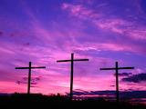 Lavender crosses