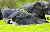Kibwezi Forest, Kenya