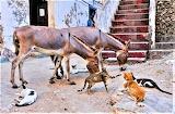 Cats and Donkeys