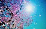#Blooming Spring